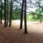 Schwartz Campground, OR