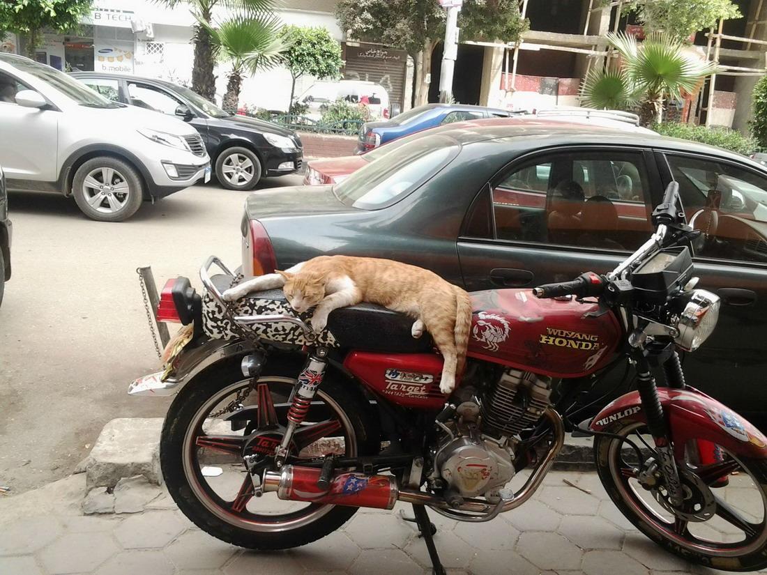 Cat Nap - hungeree.com