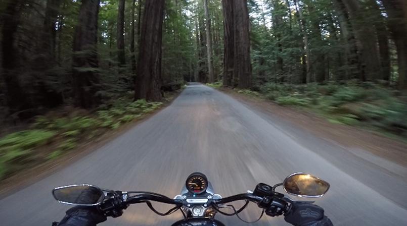 phoenixproject-redwoods10